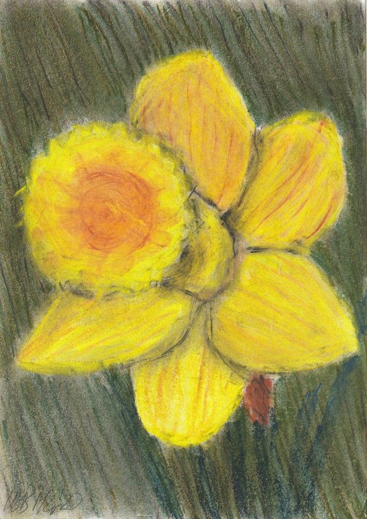 Daffodil21Mar20