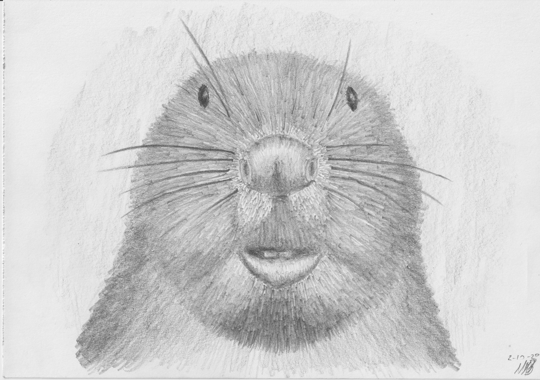 Beaver2Oct20