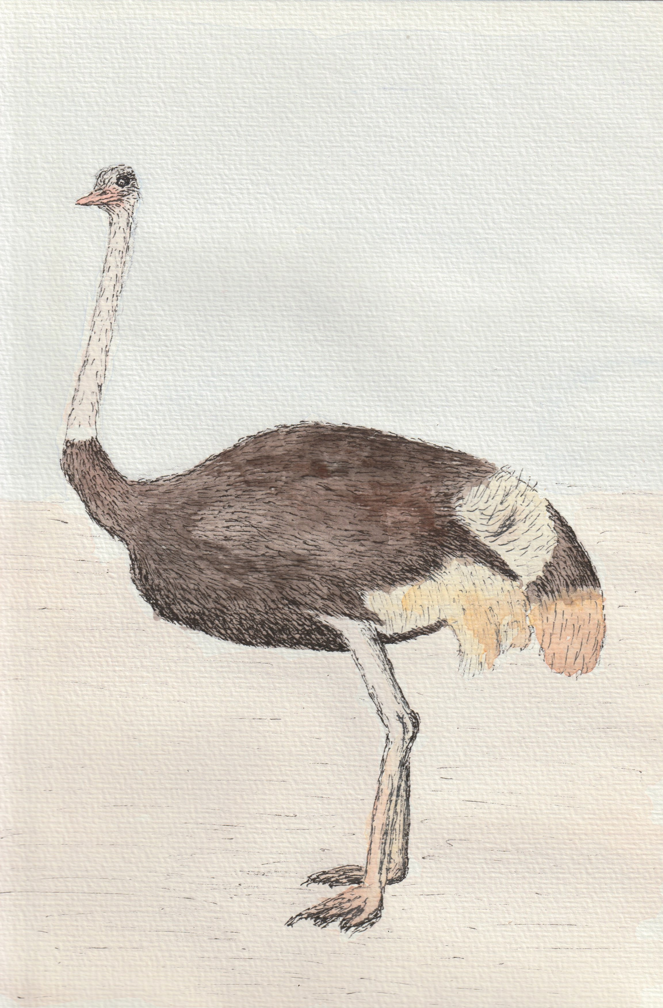 Ostrich_22May21 1